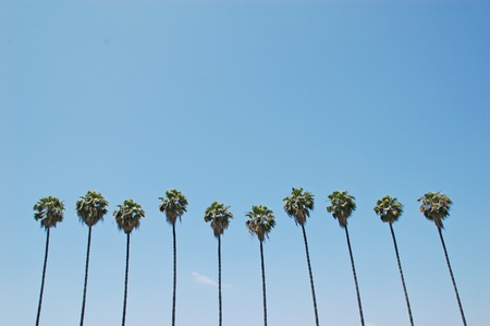 Row of many palm trees against a blue sky