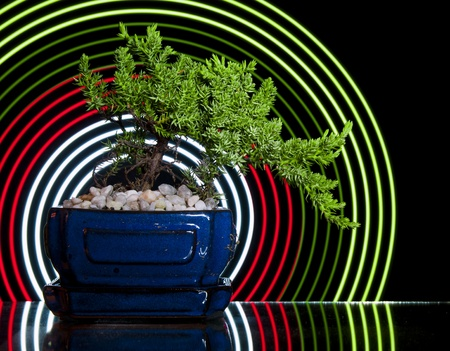 centred: Bonsai Tree wiith abstract concentric circles behind it. Stock Photo