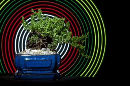 energising: Bonsai Tree wiith abstract concentric circles behind it. Stock Photo