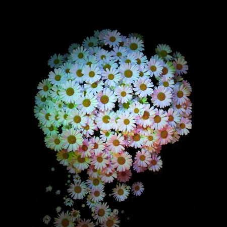White daisies with multiple colored lights shining on the surface of the patch flowers isolated on black background photo