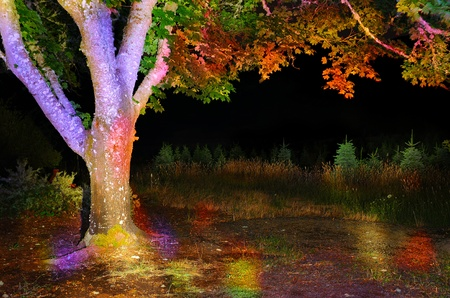 Colorful tree with empty space to the right of it outside