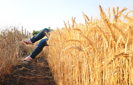 tantalising: female legs and feet coming out of a wheat field
