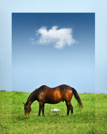 coexist: Side view of a horse with a duck beneath him, both eating lush green grass, under blue sky with one white fluffy cloud