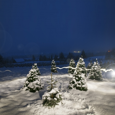 Night time image of a snowy landscape with Christmas trees. Stock Photo