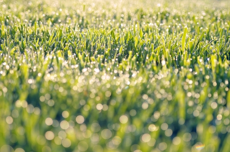 Close-up shot of grassland with dew drops, selective focus Stock Photo - 16727181
