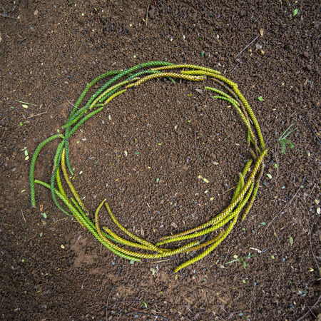 sallow: Organic green looking O circle shape on brown dirt Stock Photo