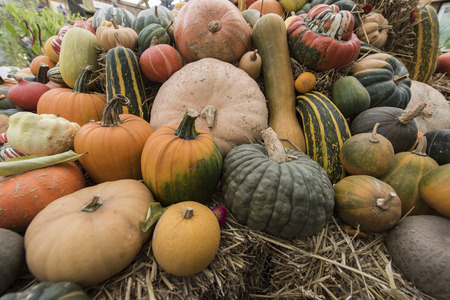 gourds: Autumn squash resting on piles of hay