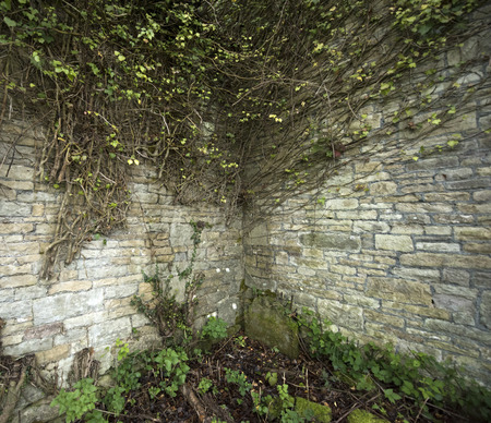 invasive plant: Cobblestone Corner Wall with ivy vines growing over it