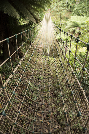 rope bridge: Jungle rope bridge suspended across the jungle area in The Lost Gardens of Heligan, Cornwall, UK