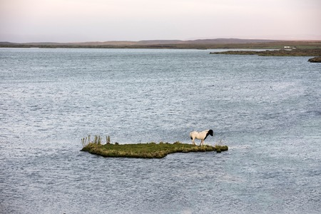 Stranded horse on an small island