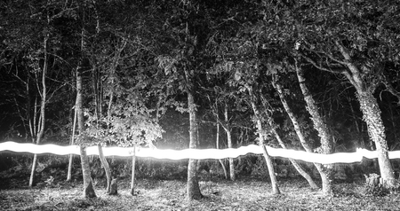 Forest with lightpainting Reklamní fotografie