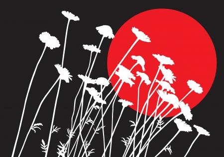 oxeye: Ox-eye daisy silhouettes against black background Illustration
