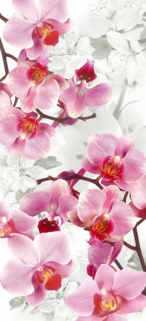 Orchids and flowering cherries decoration photo