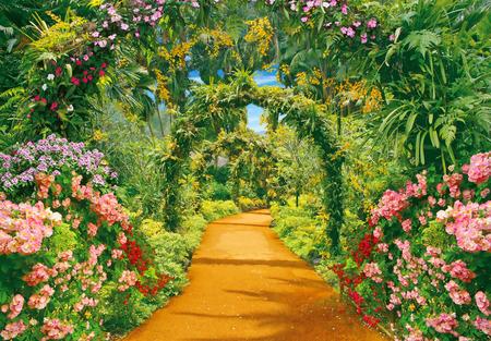 liana: Illustration of flower alley and liana arches