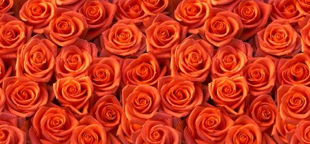 Red roses horizontal seamless pattern Stockfoto