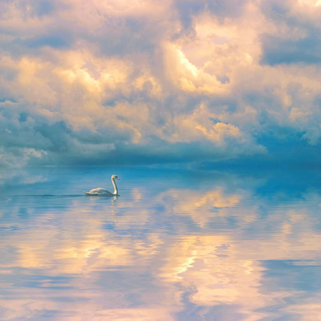 Swan on calm blue lake against a dramatic cloudy sky background. Dramatic cloudy sky background reflecting in calm water