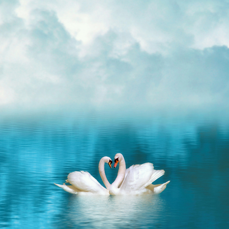 Two graceful swans in love reflecting in calm emerald water on foggy background. Swans couple on emerald lake Stock Photo
