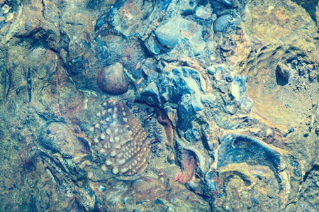 Underwater prehistoric seashell fossils. Fossilized multicolored shells in fragment of rock Stock Photo