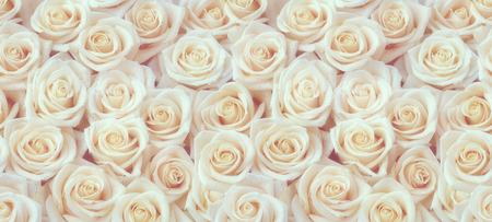 White roses horizontal seamless pattern. White roses arrangement. Stock Photo