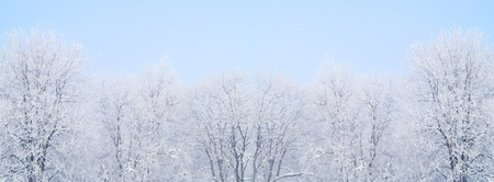 Trees covered by snow and hoarfrost against pastel blue background. Tops of winter trees at foggy morning panoramic view Stock Photo