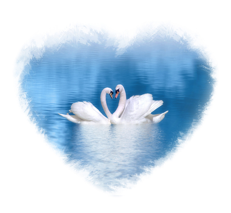 Couple of swans in love on blue lake framed with a watercolor heart shape.