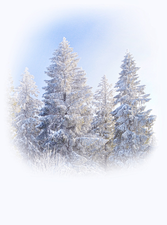 Fir trees covered by snow and hoarfrost on foggy blue sky background. Winter fir trees in a blurred white frame. Christmas greeting carg background.