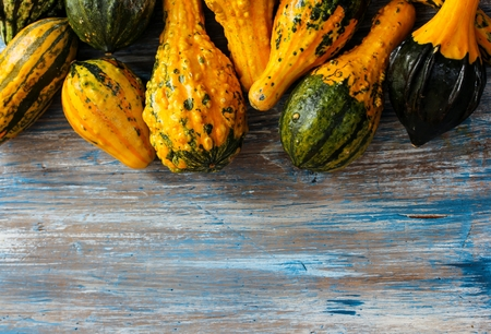 gourds: Winter gourds in different shapes halloween and thanksgiving decoration