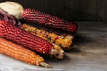 moody background: Ornamental corn still life on dark moody background
