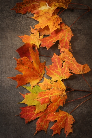 moody background: Background of Colorful Autumn Leaves on dark moody background Stock Photo