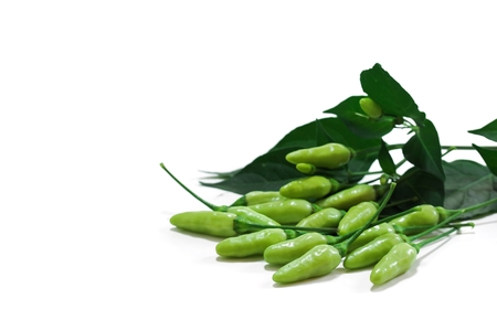 Home grown Green Chillies  with leaves isolated on white Stock Photo