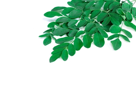 Moringa Leaves with fresh leaves isolated on white, selective focus