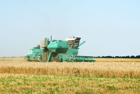 Combine harvests on the field in summer photo