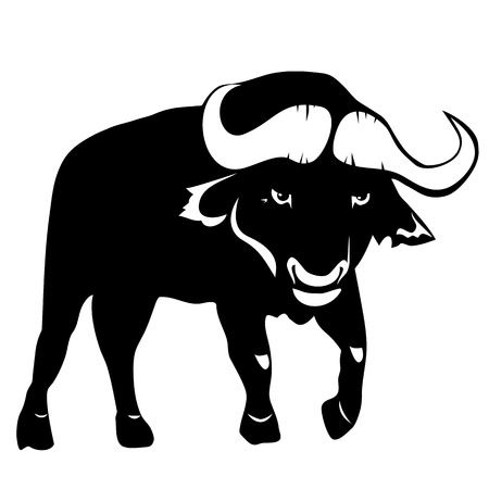Buffalo on a white background