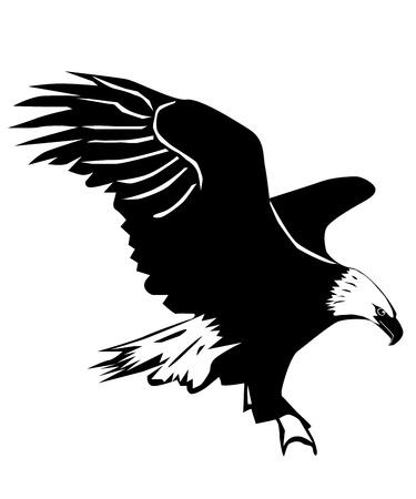흰색 배경에 독수리