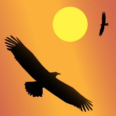 The national bird of the United States, the Bald Eagle Vector