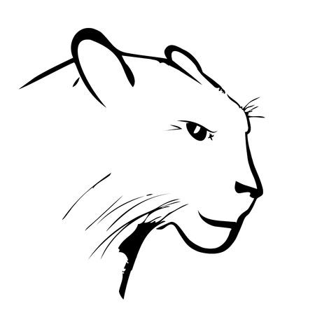 흰색 배경에 표범