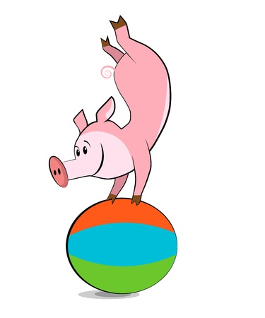 shaping: Pig exercising with a pilates ball