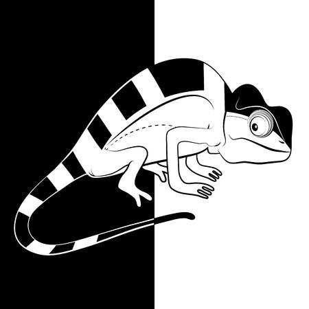 Chameleon on black and white background Stock Vector - 19082449