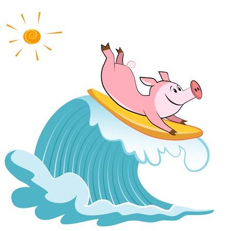 chancho caricatura: Cartoon cerdo Surfer