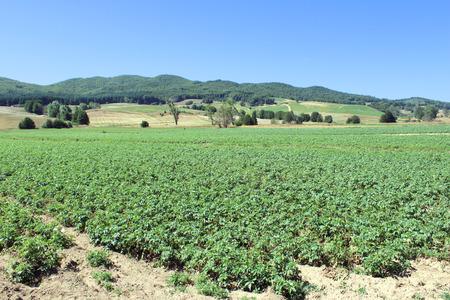 pesticides: Mountain Farming, Trees