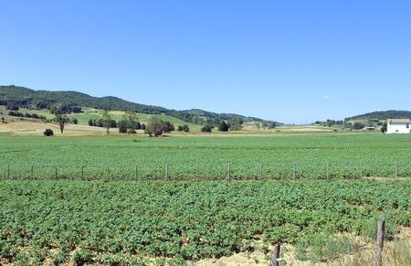 Mountain Farm Banque d'images