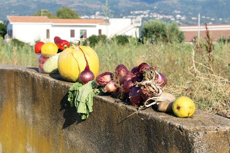 Vegetables on the Wall Reklamní fotografie
