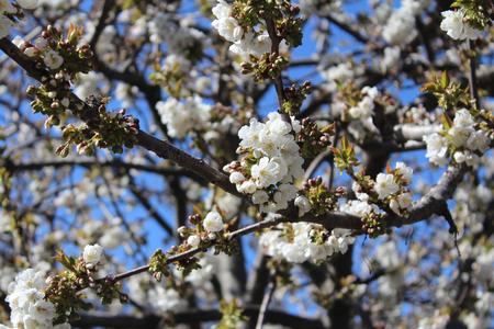 Peach Blossoms Zdjęcie Seryjne
