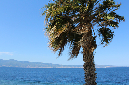 seafronts: Palm Tree and Strait of Messina as seen from Calabria, South Italy