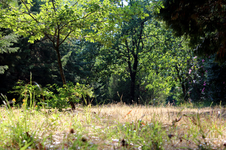 Wild Park, Grass and Trees, Nature