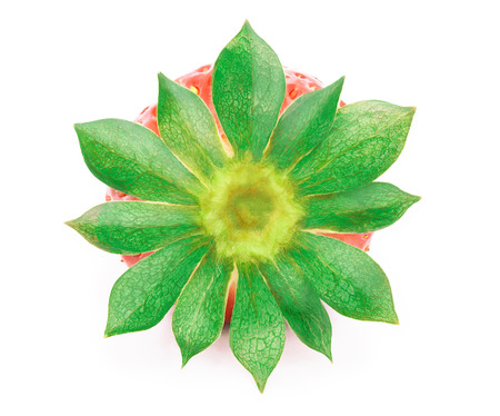 cleaned: Perfectly cleaned strawberry with leaves isolated on the white background with clipping path. Back view.