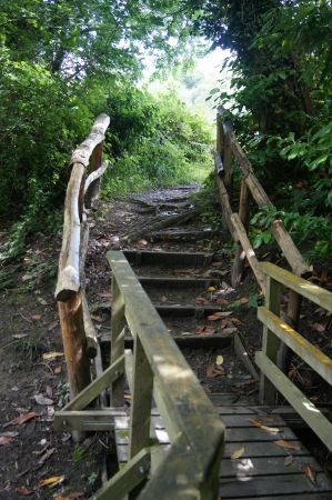 wooded path: Steps leading up along a path through the wooded landscape
