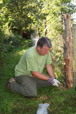 enclosure: Man hammering nails to attach stock fencing for animal enclosure Stock Photo