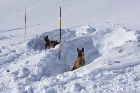 雪崩救助犬訓練 exerise 中雪の洞穴で休息