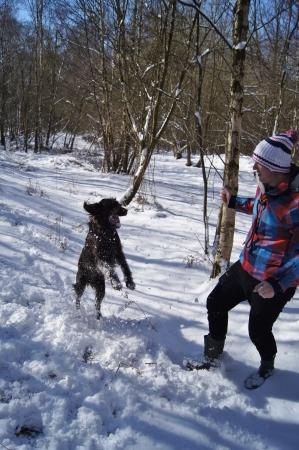 男と雪の中で遊んでフラットコーテッド ・ レトリーバー犬 写真素材